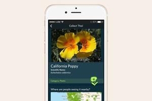 Что скачать: Приложение Seek — Shazam  для животных и растений