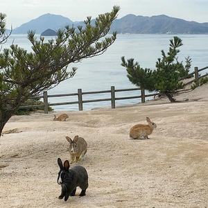 От деревни лис до пляжа свиней: Места, которые захватили животные