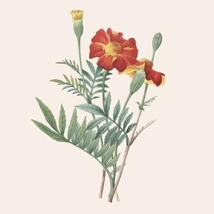 «Карма» и этичное сырьё: Саймон Константин о парфюмерии Lush