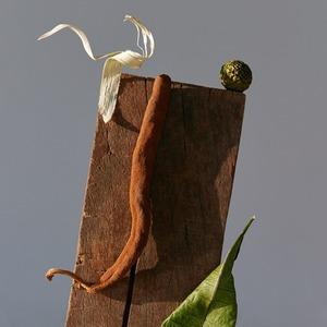 «Kælǣ koṭas»: Лесные скульптуры в фотопроекте Юли Татарченко
