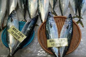 Новую съёмку J.Kim сделали на рыбном рынке  в Южной Корее