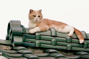 Видео дня: трейлер фильма про котов по видеоигре Neko Atsume