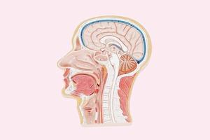В закладки: Виртуальная семантическая карта мозга