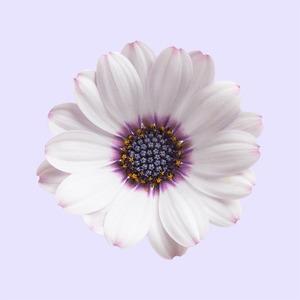 На солнце, сперму и холод: 11 вопросов об аллергии