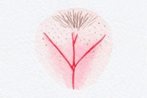 На кого подписаться: Инстаграм The Vulva Gallery о красоте женских гениталий