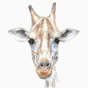 Ужасы дикой природы: Я спасаю животных от людей