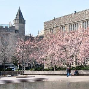 Как я уехала в Принстон изучать средневековый Ближний Восток