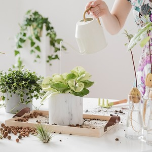 Как позаботиться о комнатных растениях осенью и зимой