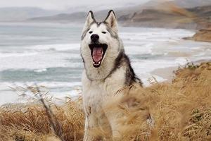 На кого подписаться: Умилительный пёс-путешественник Локи