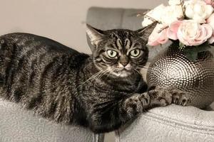 На кого подписаться: Вечно недовольная кошка Киця