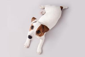 В закладки: Cайт для чувствительных киноманов «Does the Dog Die?»
