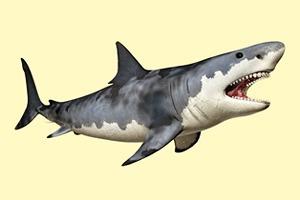 Американка переплыла пролив между Кубой и США, не испугавшись акул