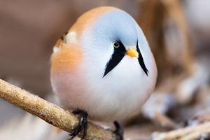 На кого подписаться: Твиттер о круглых зверях и птицах