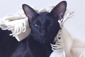 На кого подписаться: Инстаграм нашего редакционного кота Старки