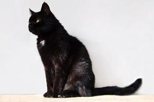 На кого подписаться  в Twitter: Меланхоличный кот «My Sad Сat»