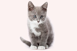 Мир поделили на любителей кошек и собак