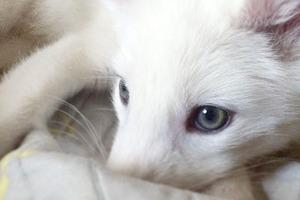 На кого подписаться:  Инстаграм белоснежной лисицы Рилай