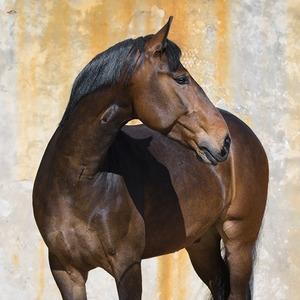 «Когда всё плохо, обнимаешь лошадь — и жизнь опять прекрасна»: Я — конный массажист
