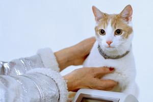 Rehabshop выпустил новогодний лукбук c сотрудниками и котом