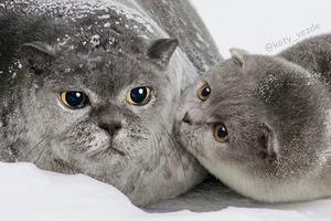 На кого подписаться: Коты везде