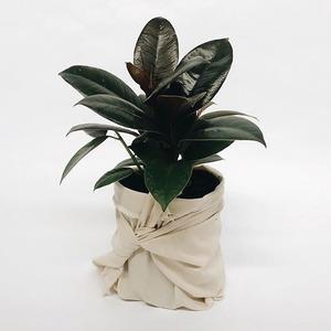 Садовод-любитель: 10 комнатных растений, которые сложно убить