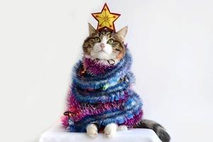 Санта-Мяус: Праздничные коты в новогодних костюмах