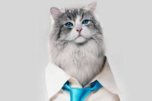 Кевин Спейси — кот  в трейлере «Девяти жизней»