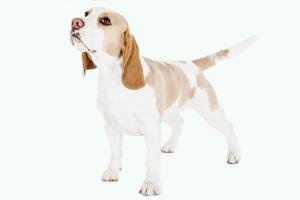 Чудо-собака возвращает забытые вещи пассажирам KLM