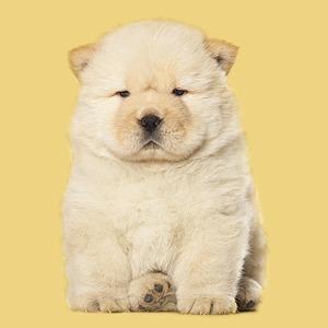 Плюс 10 к харизме: Породы собак, которые украшают мужчину
