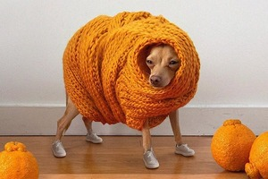 На кого подписаться: Собака-инфлюэнсер, которая нужна нам всем