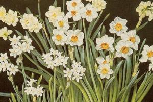 На кого подписаться: Инстаграм о растениях с картин