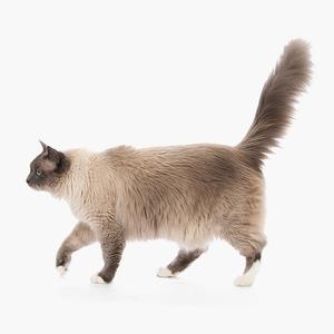Детство, глютен и «голые» кошки: Развенчиваем мифы об аллергии