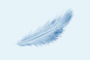 Topshop и ASOS отказались от использования птичьего пуха