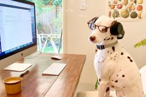 На кого подписаться: Деловые собаки, которые работают из дома