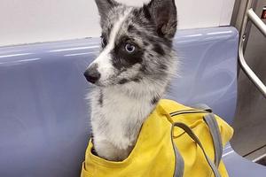 На кого подписаться: Инстаграм о собаках в сумках