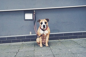 На кого подписаться: Инстаграм о собаках, ждущих своих хозяев