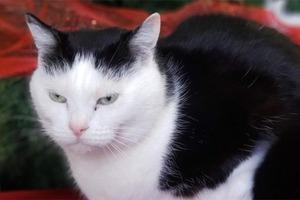 «Самой ужасной кошке  в мире» нашли хозяев