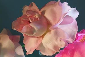 На кого подписаться: Нежный инстаграм студии флористики