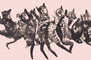 Блог Brides Throwing Cats про невест и летающих кошек