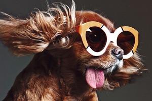 В лукбуке Karen Walker снялась собака — звезда Instagram