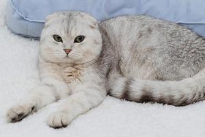 В закладки: Дружеский сайт rrrrrrr о животных