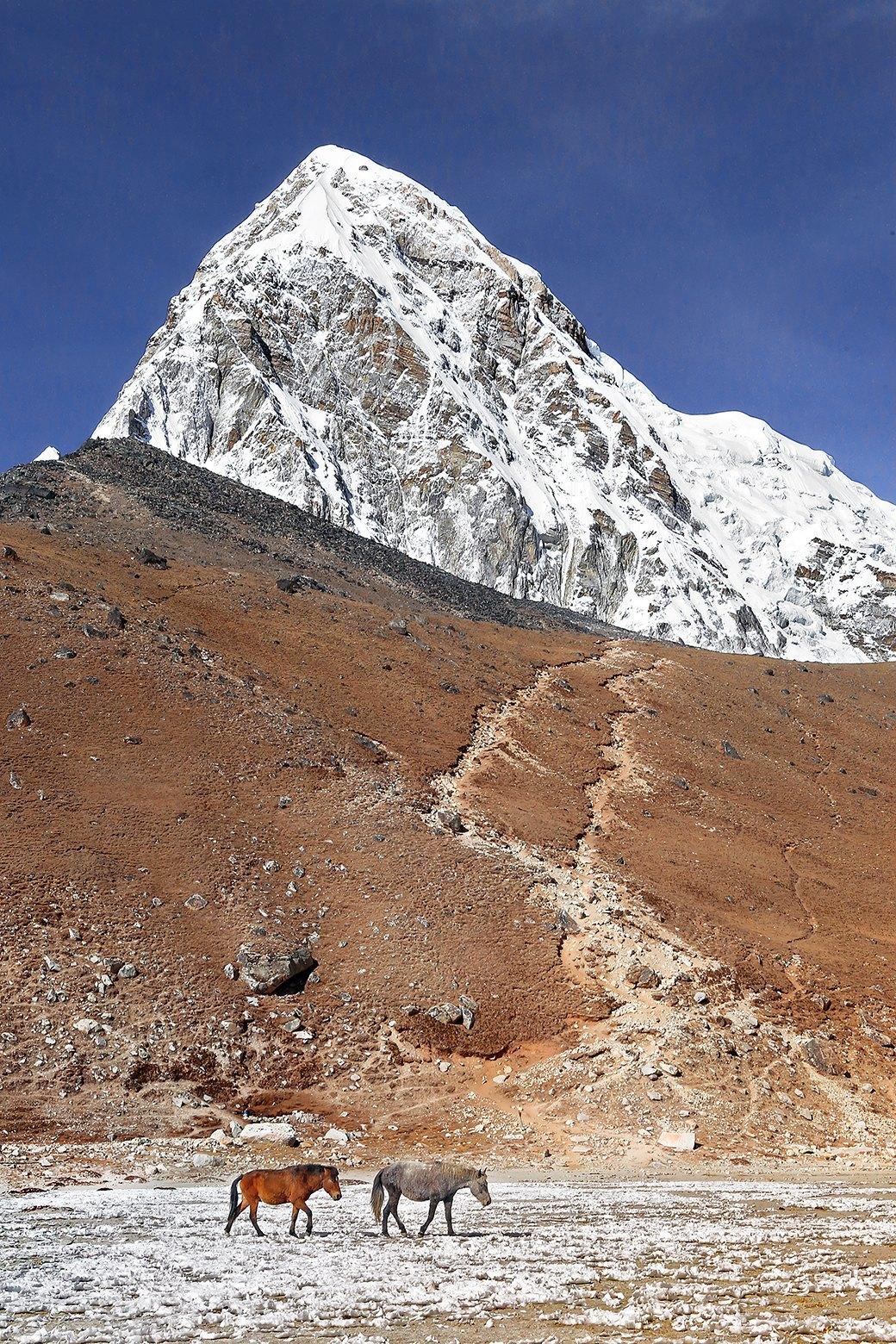 Как путешествовать  в одиночку: 9 месяцев  в Индии и Непале . Изображение № 9.
