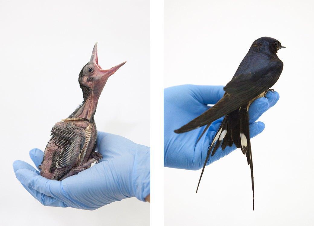 «Birds Don't Cry»: Сова, чайка и другие постояльцы приюта для птиц. Изображение № 5.