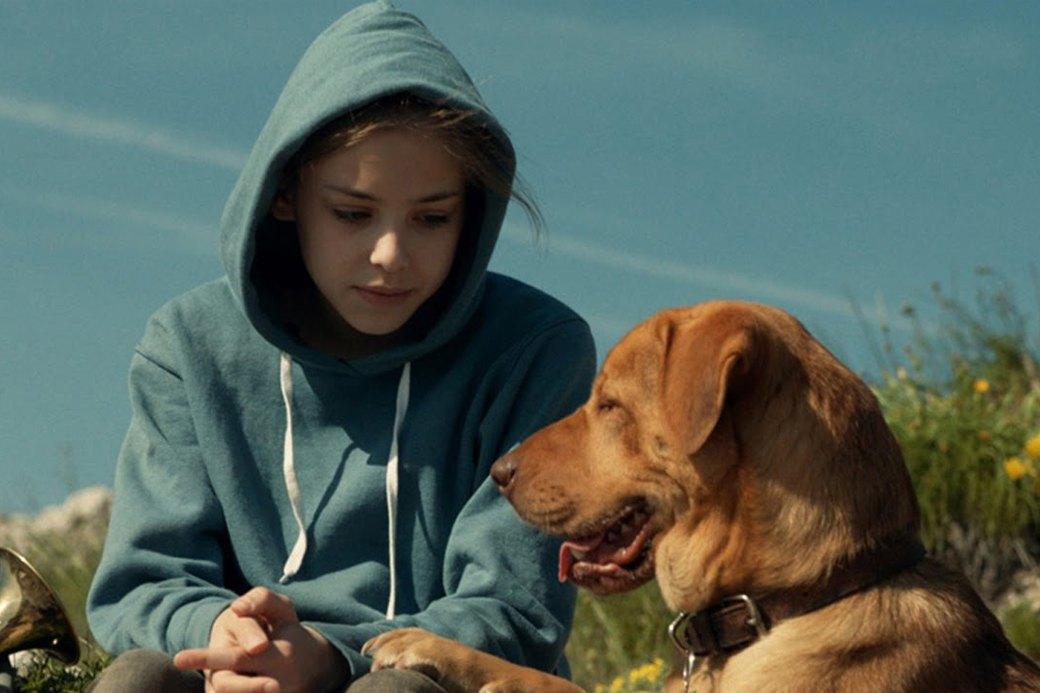 Верный друг: 10 фильмов с любимыми собаками в важной роли. Изображение № 10.