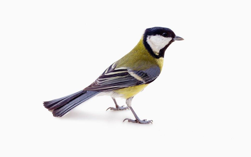 Леттеринг, орнитология  и другие медитативные хобби на каждый день . Изображение № 4.