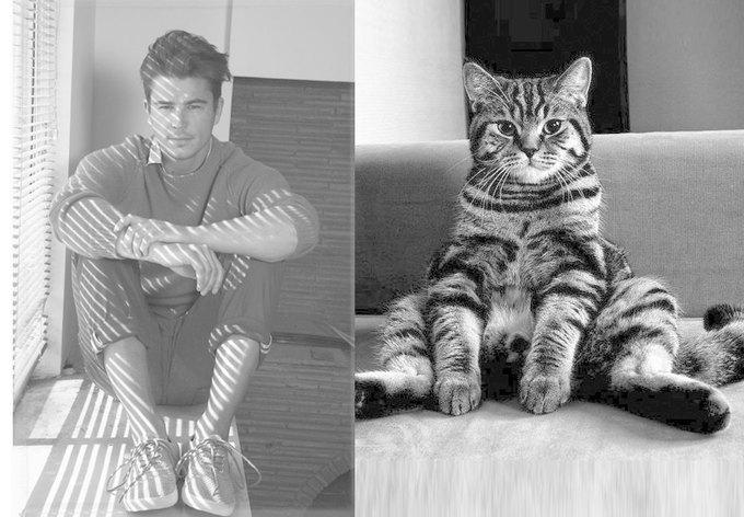 Тумблог  с мужчинами и котами Des Hommes et des Chatons. Изображение № 4.