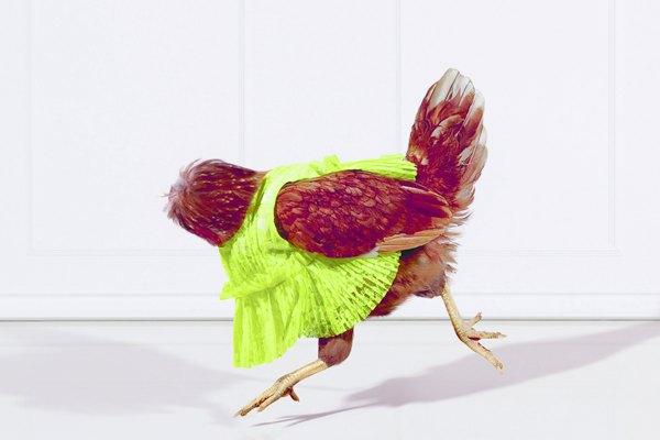 Для кампании магазинов Harvey Nichols сняли безголовых куриц. Изображение № 1.