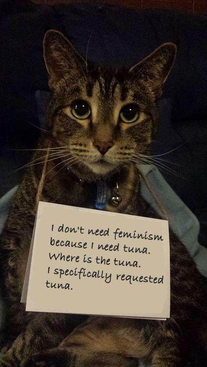 В новом тумблоге кошки борются с феминизмом  (на самом деле нет). Изображение № 2.