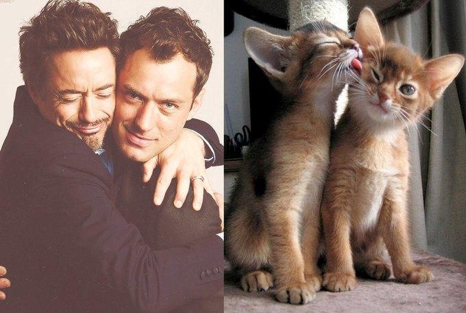 Тумблог  с мужчинами и котами Des Hommes et des Chatons. Изображение № 1.