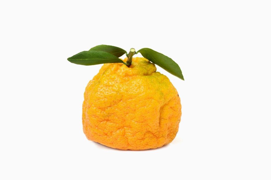 Неестественный отбор: Почему «уродливые» овощи и фрукты не попадают на прилавки. Изображение № 5.